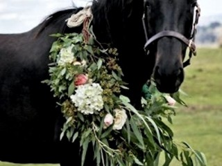 Black-horse-floral-wreath