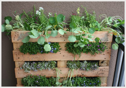 Image result for apartment gardening